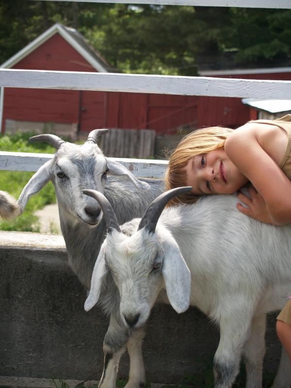 Unsere Cashmere-Ziegen - kommt ja, Kaschmir von Ziegen.