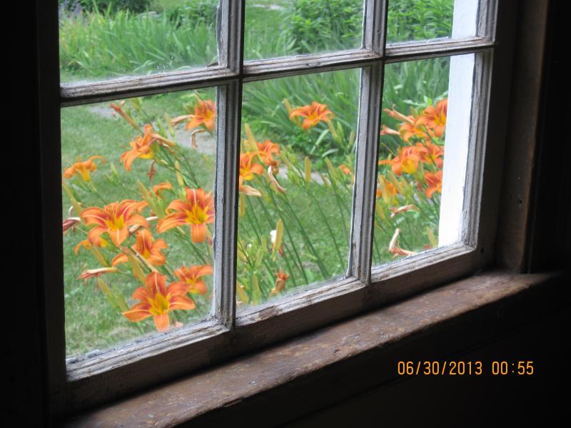 Une vue de daylillies à l'extérieur de la fenêtre de salle à manger maison principale