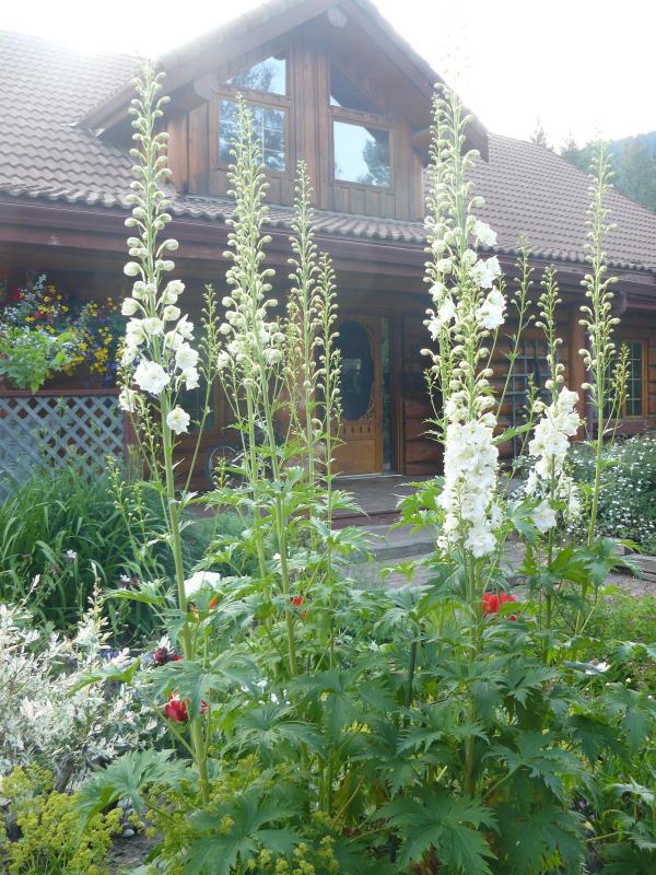 Garden scenery