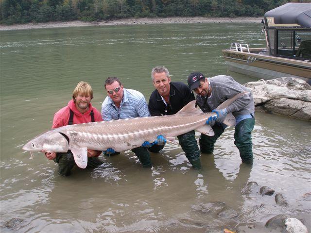 Esturión pesca durante todo el año