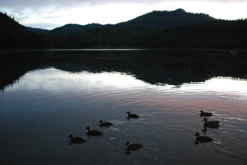 Fauna selvatica abbonda sul lago cucchiaio
