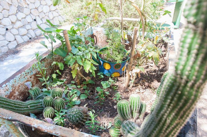 A tiny cactus garden