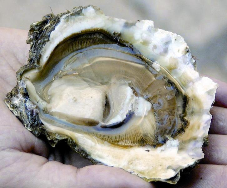 In the nearby village of Drace you can taste the best oysters ever