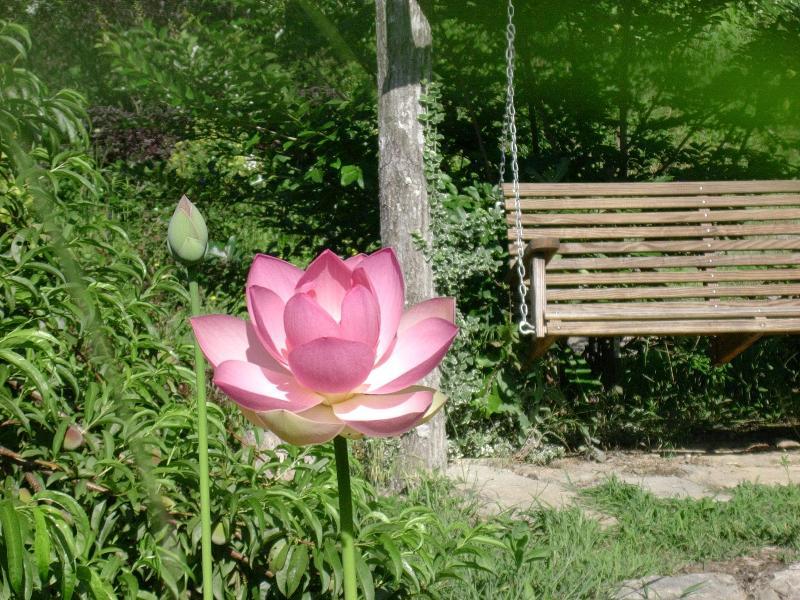 Jardín acuático de Lotus