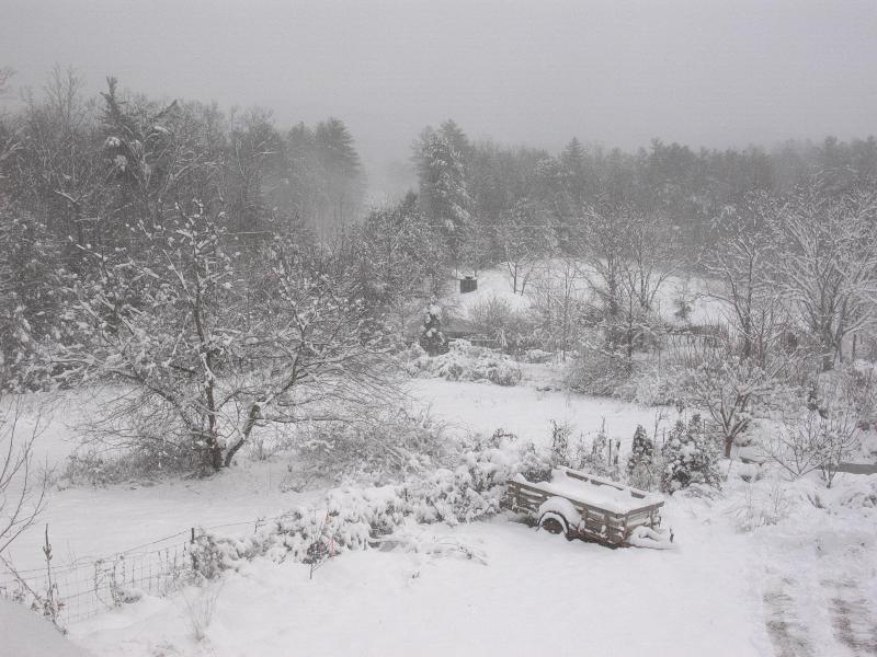 Invierno en primavera de Sharon