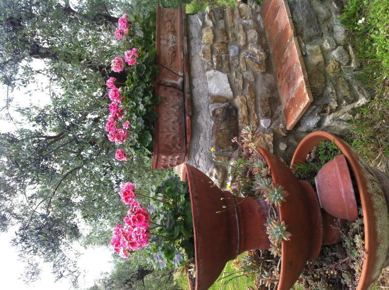 Flores en el jardín
