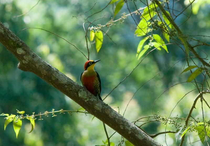 Bird watching paradise