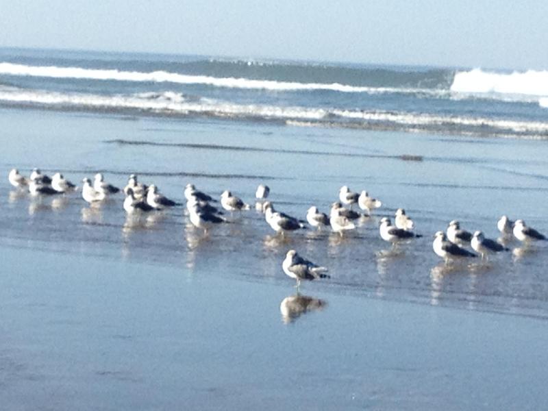 Caucus di mattina in spiaggia