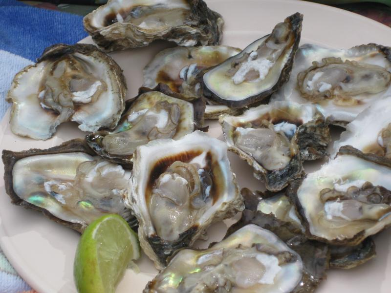 Freshly catched oyster