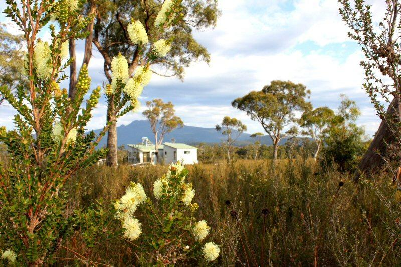 Self contained cabin among the flowers of this native buttongrass moorland