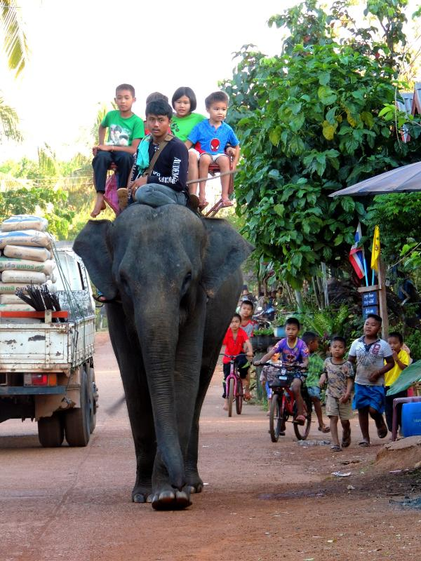 Elephant in the village