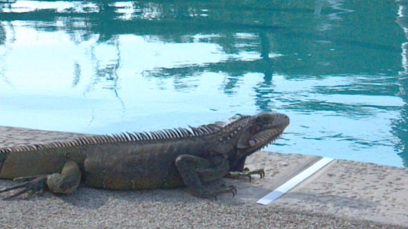 The local wildlife love the pool too, but don't worry, they're harmless.