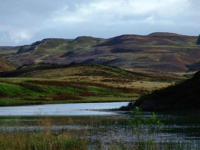 The beautiful hills of heather
