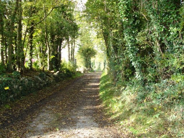 Perfecto para un paseo tranquilo