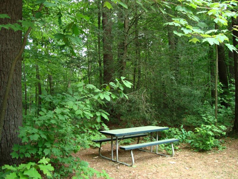 Mesa de picnic bajo las copas de los árboles