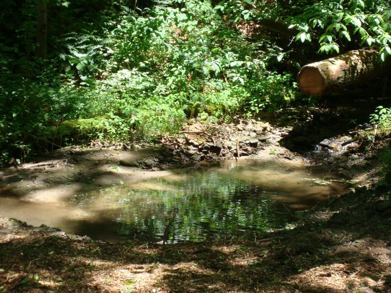 Arroyo desemboca en un pequeño estanque ubicado en el fondo de la superficie cultivada
