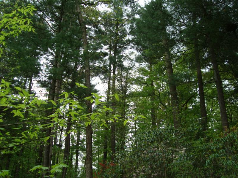 La cabaña se encuentra bajo un dosel de árboles hermosos