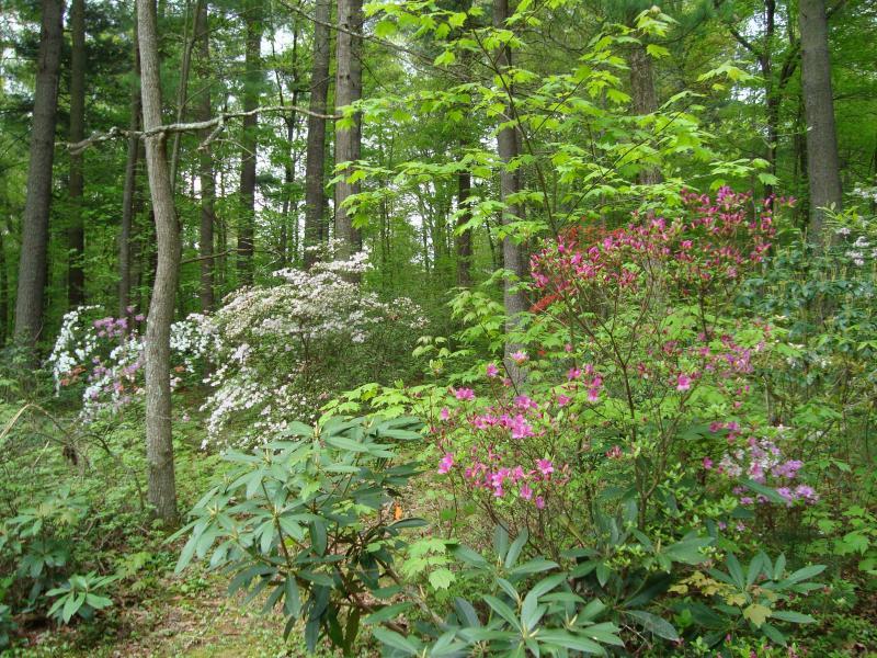 Resorte tiempo florece en nuestro bosque de bosques