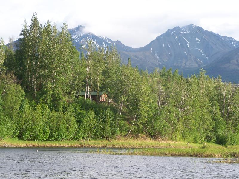 Rustic Spruce from your fishing boat on Thirty Mile lake, Chickaloon!