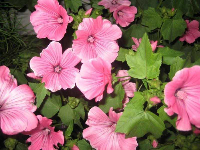 Fleurs qui fleurissent à la fin août sur la propriété