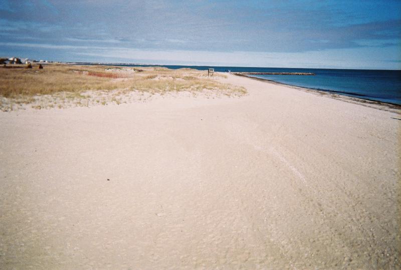 Seagull beach view