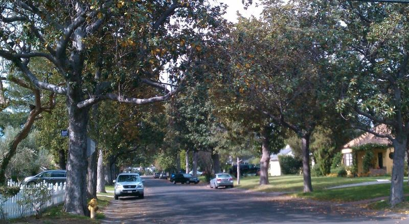 Rue bordée d'arbres - toutes les maisons personnalisées