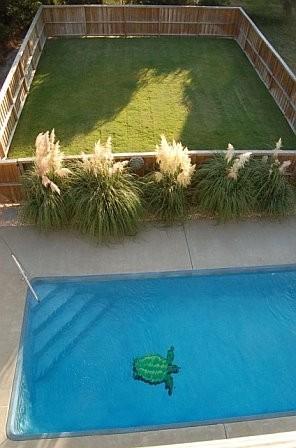 Swimming Pool and Dog/Play Yard,