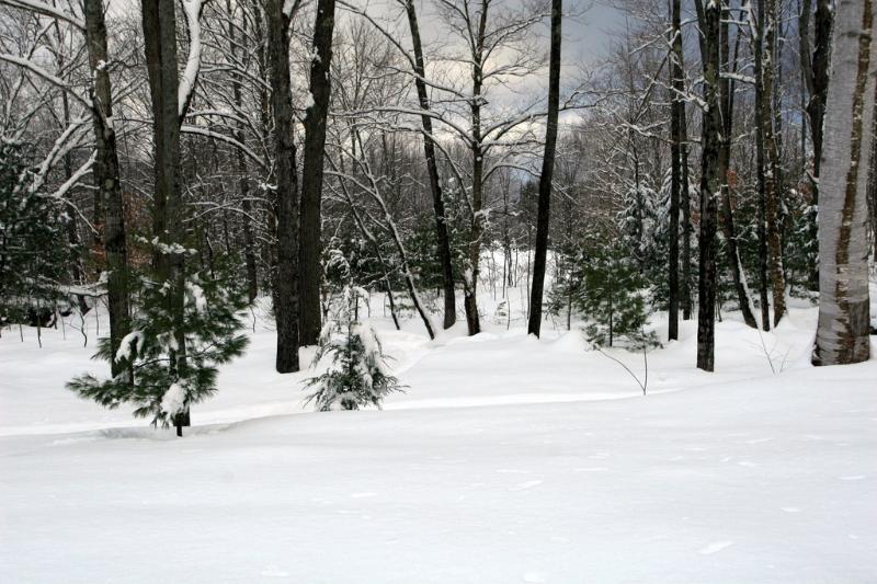 Great Brook in wintertime, frozen and snowed in