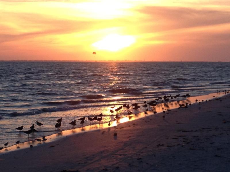 Beach Wildlife