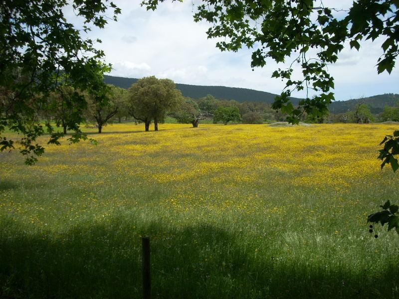 Promenez-vous dans le parc naturel de la Serra de São Mamede, c'est une vue printanière non loin de la Quinta
