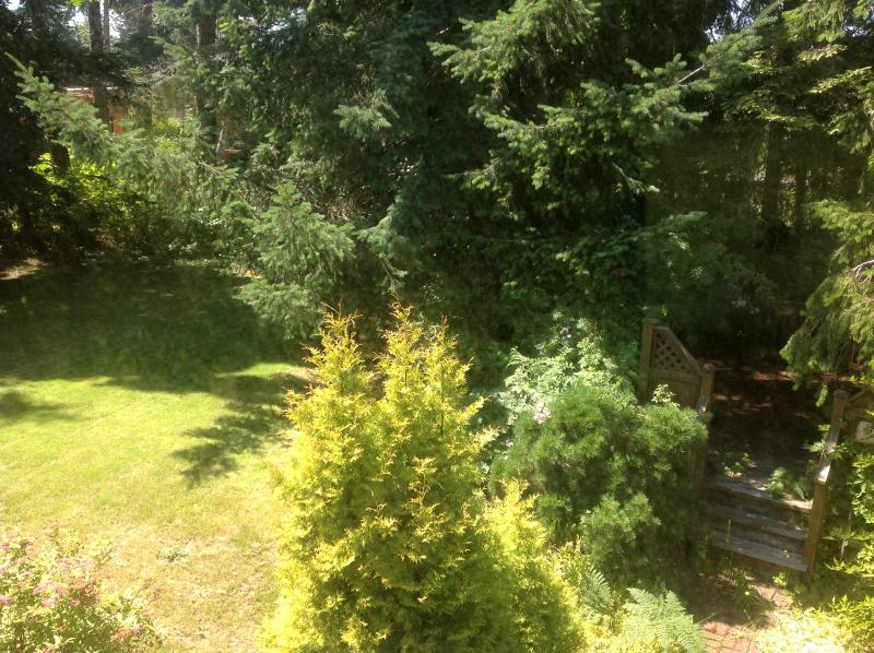 View from Sage Room to our tall trees and lush green space.  Our yard is quiet and private.