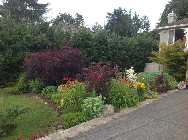 We have several gardens, This is our perennial garden with japanese maple trees,  gunnera, poppies +