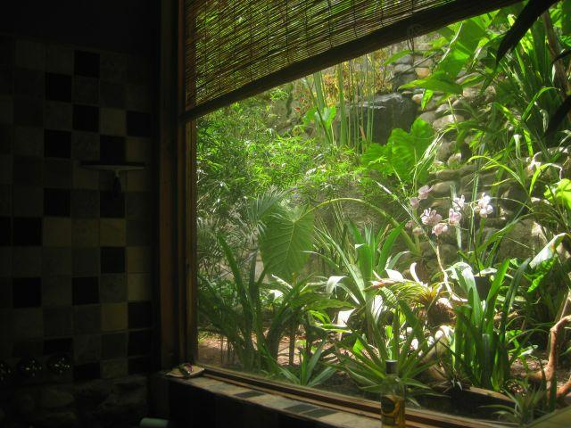 View out the bathroom window of the tropical orchid garden and cascade