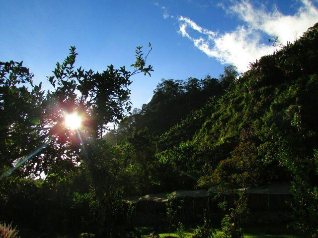 Sunset over the coffee plantation