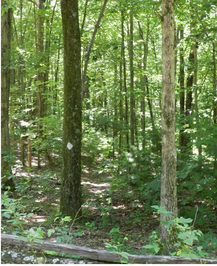 Benton MacKaye Hiking Trail