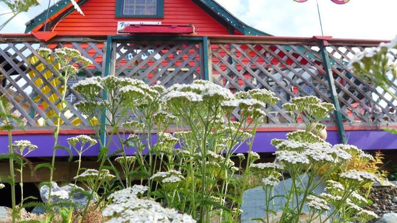Flores silvestres florecen frente a tu porche