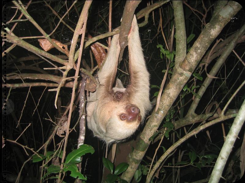 Sloth Motherhood