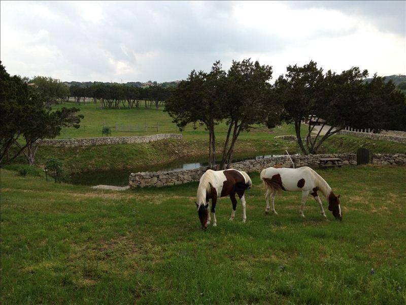 Owner's paint horses grazing on the property