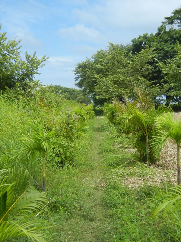 The palm-lined private path to Playa Guiones, only a 4 minute walk to the beach