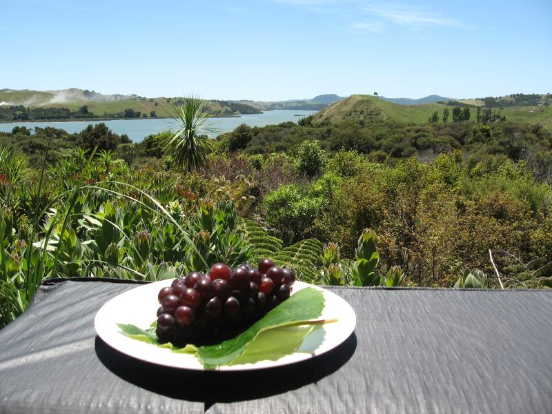 Grapes from the vine and water views