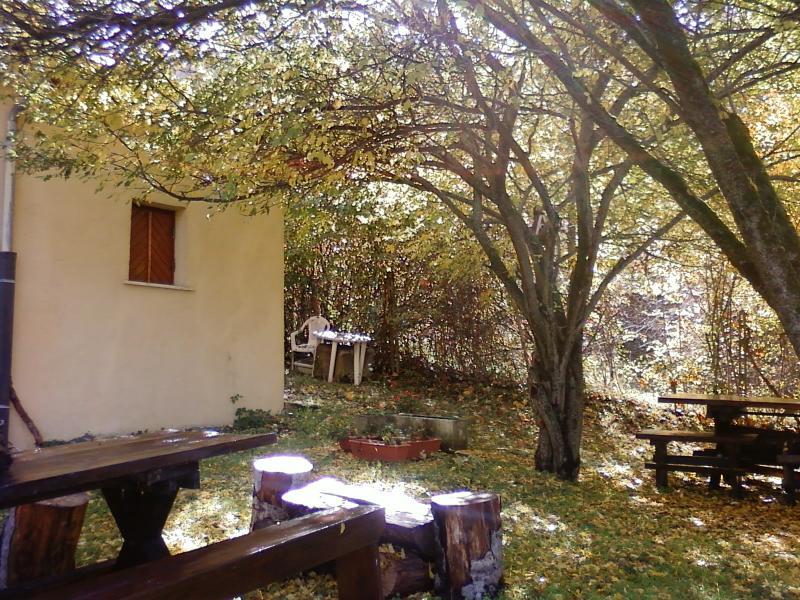 Smiling Oak in Autumn