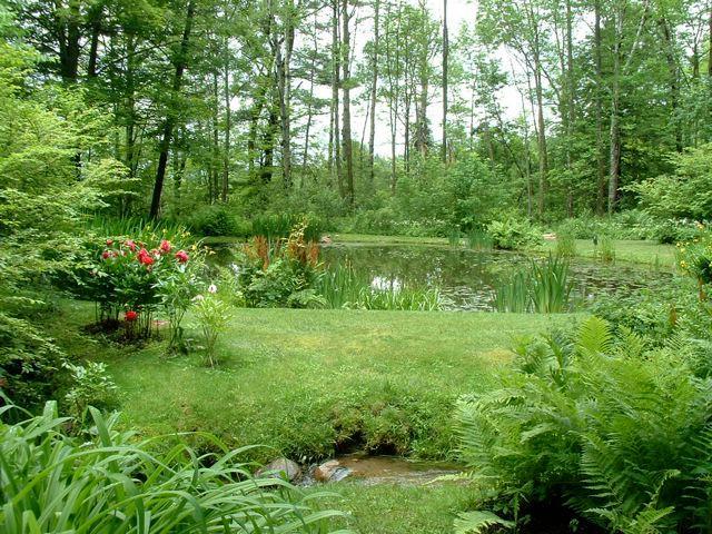 Hermoso estanque