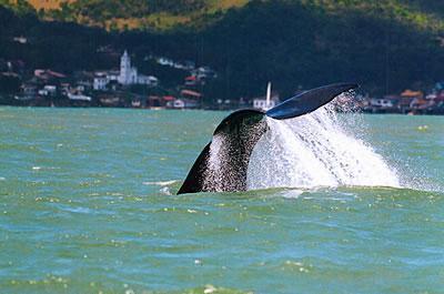 Floripa Whale Watching