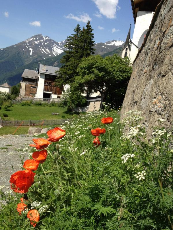 Schellenursli camino con vistas a la pintoresca y maravillosas flores.