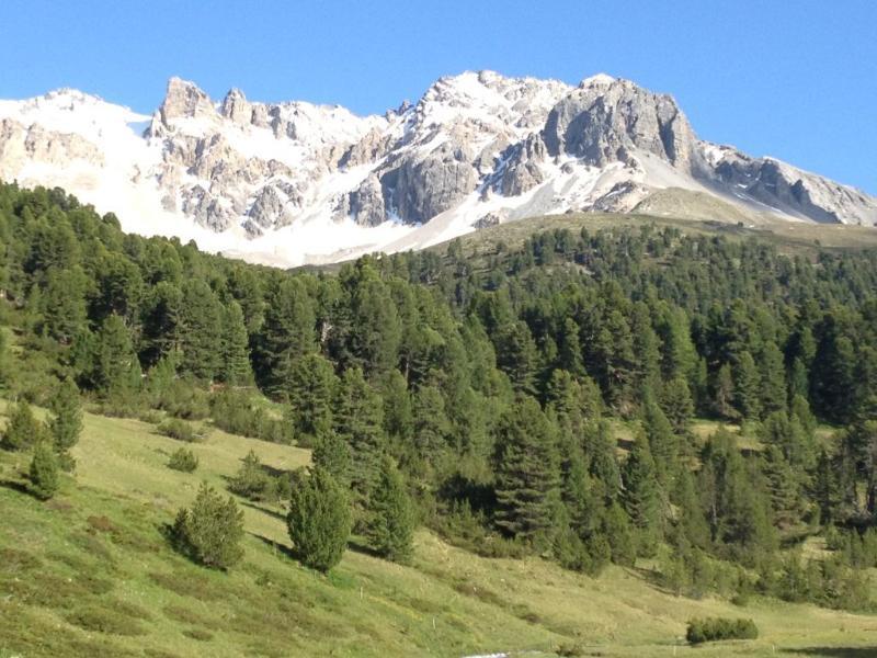 S-Charl valle muy cerca con el mundo conocido bosque de pino Tamagura
