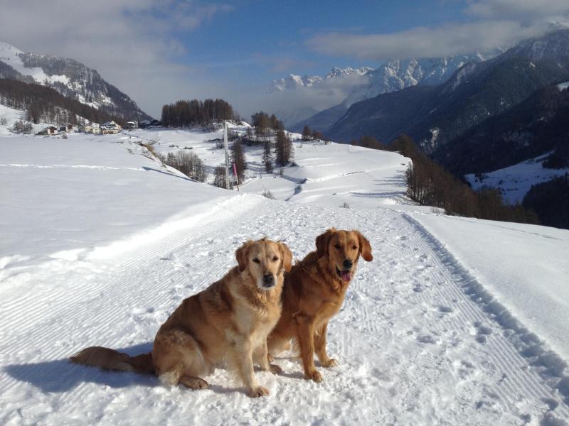 Invierno una hora entra en invierno excelentemente preparada, rutas de senderismo, también perfectos para los perros. Nuestros perros
