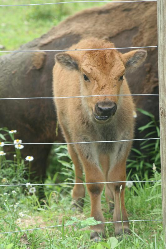 Come in the spring, you might get to see the calves being born,