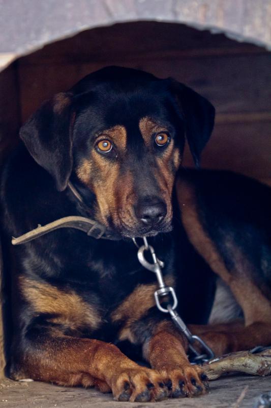 Our cute dog named Ela