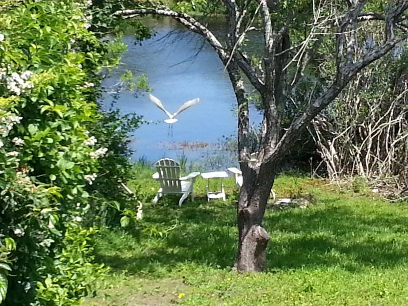 Egret flying from duck pond