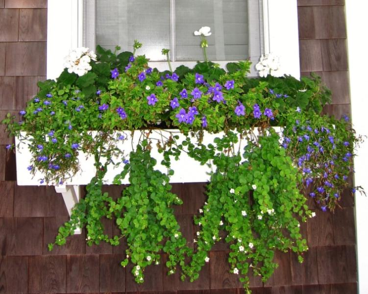 Front window boxes